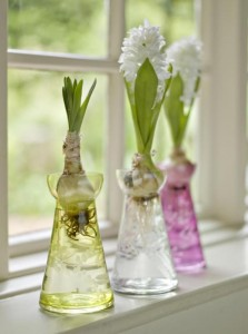Engraved glass hyacinth bulb vases fresh design blog - Vase deco pas cher ...