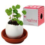 Eggling easy to grow plants