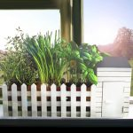 Indoor allotment herb growing kit from Prezzybox