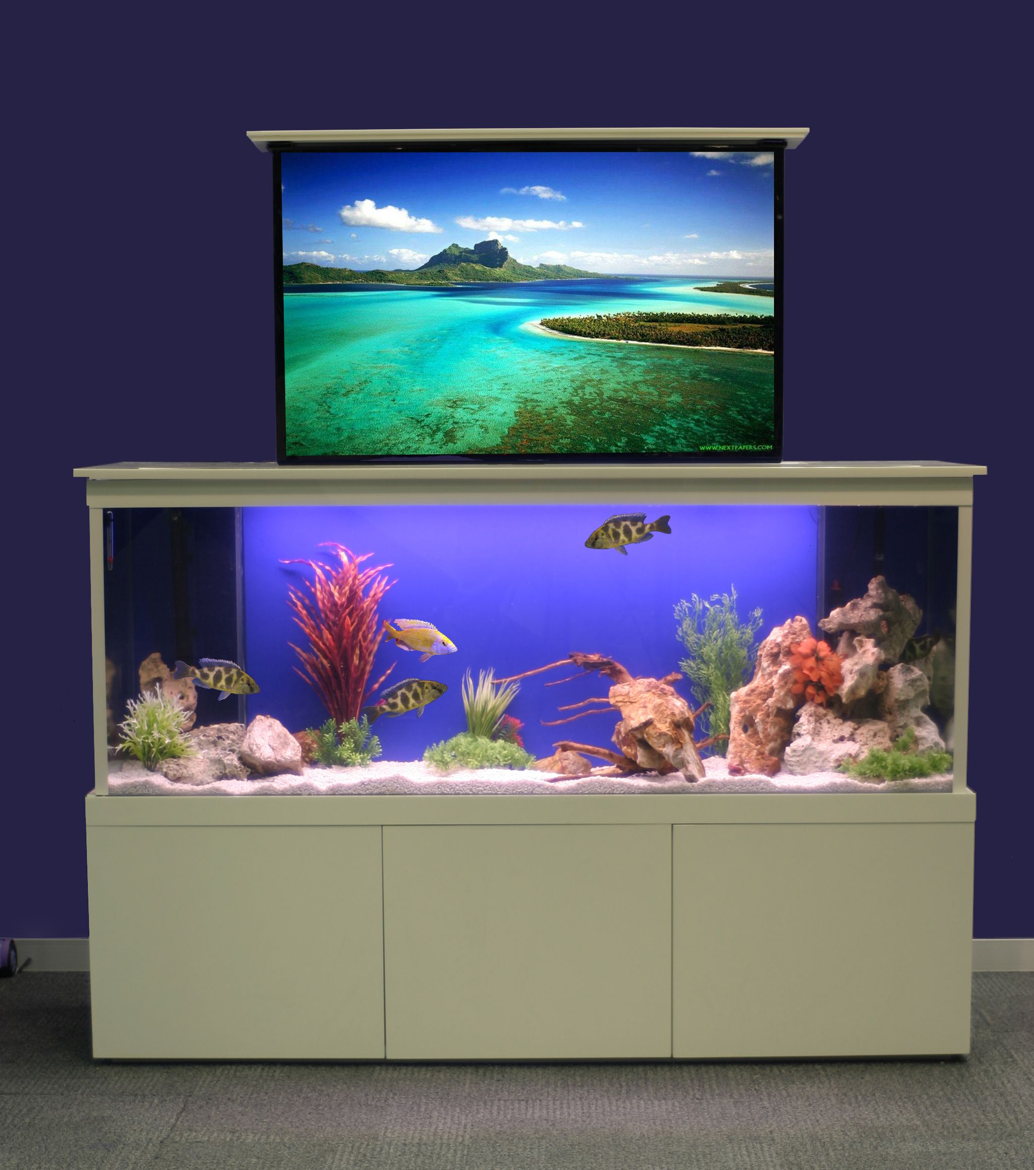 Innovative fish tank fresh design blog for Aquarium house decoration
