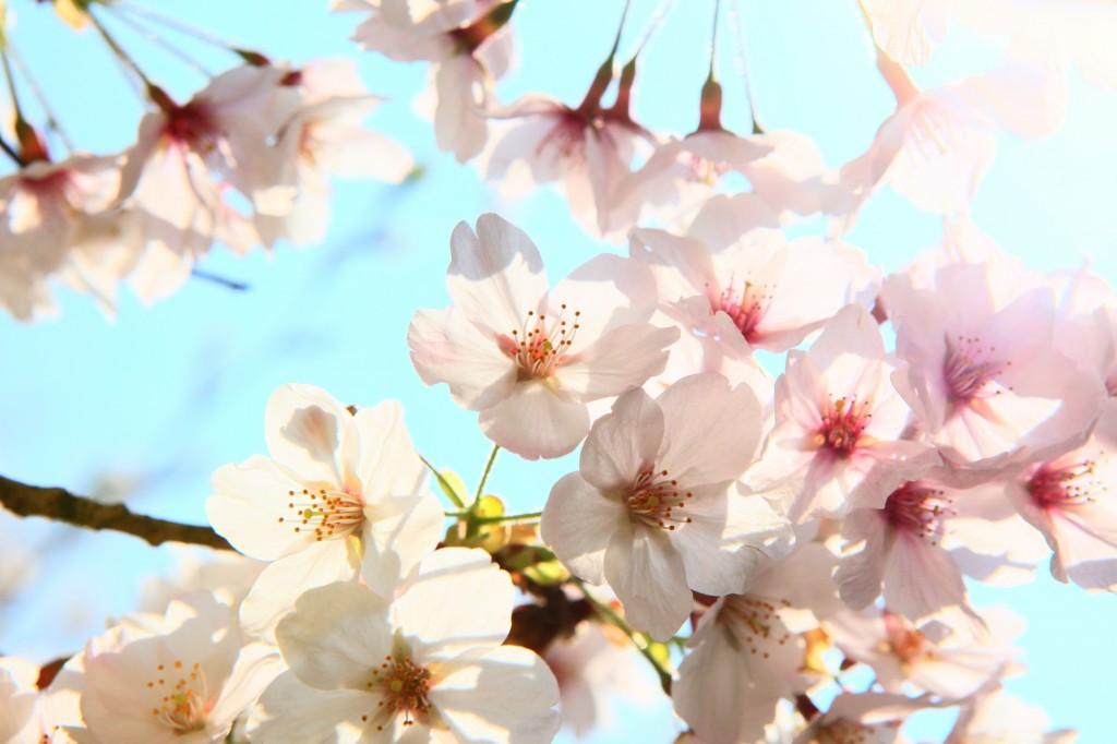 Garden jobs for spring