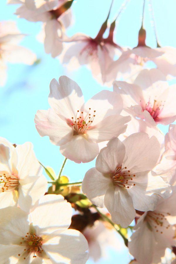 Top 5 Gardening Jobs for Spring