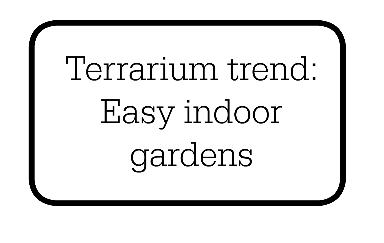Embrace the terrarium trend indoor gardening made easy for Indoor gardening made easy