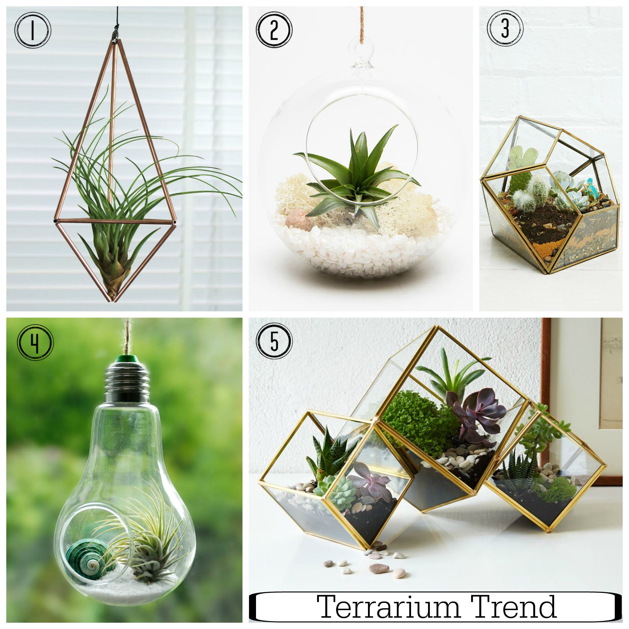 Embrace the terrarium trend indoor gardening made easy for Interior designs with plants