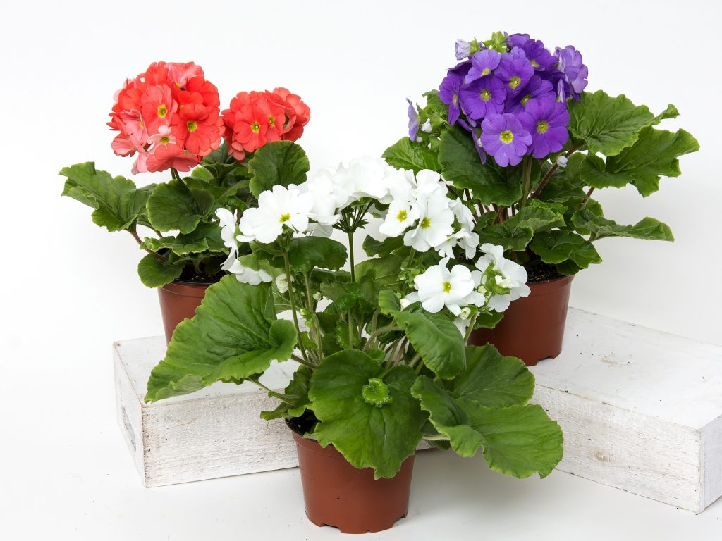 Use plants to brighten up your home cheaply and easily