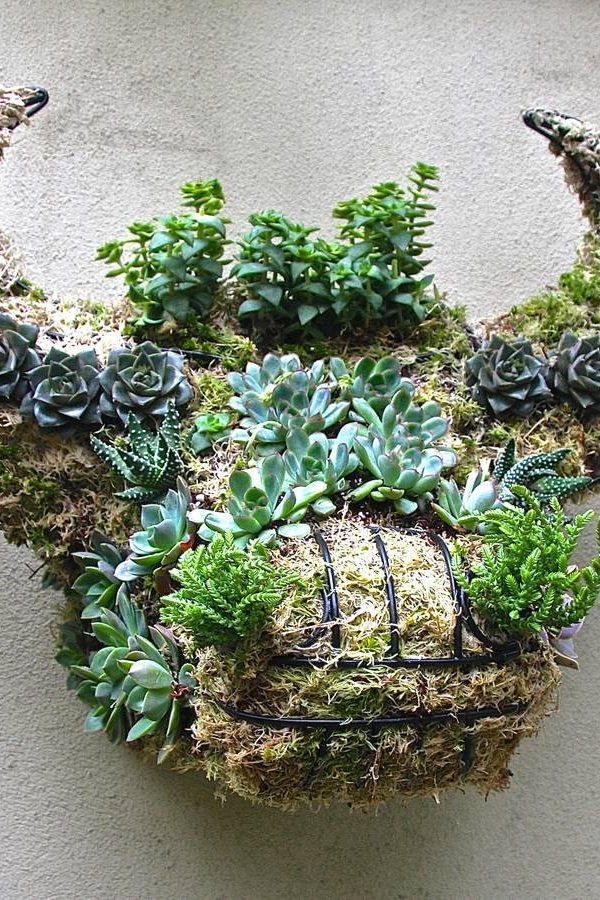 Garden ideas: Contemporary and quirky wall planters