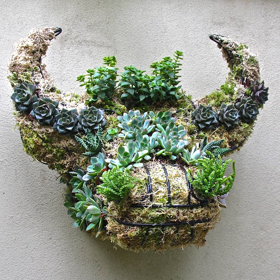 Wow! Love this idea for a striking wall planter, in the form of a buffalo head. What a brilliant garden feature.