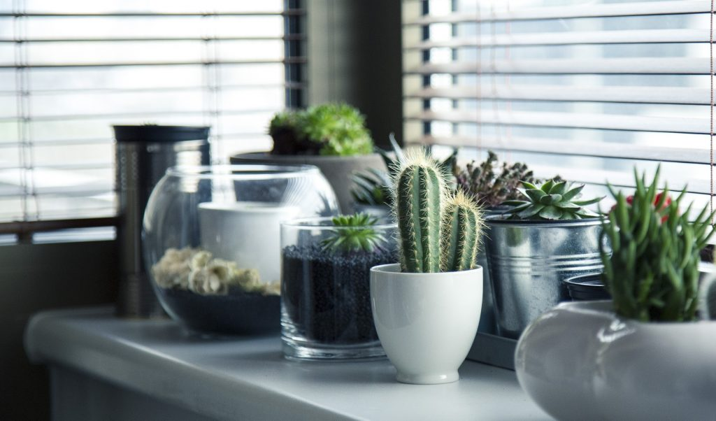 Add plants to your home as a way of bringing the outside in.